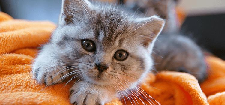 Puppy/Kitten Care